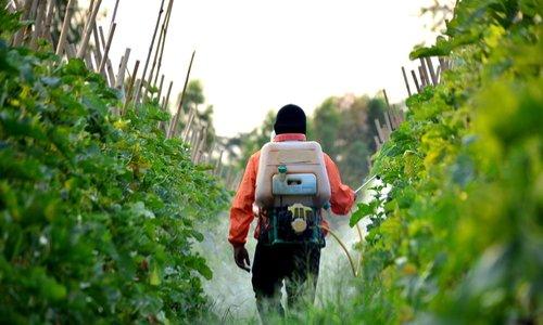 Pétition : Soutien au maire de Langouët dans son combat contre les pesticides !