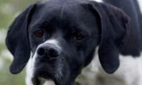 Sauvetage des chiens abandonnée dans les rues