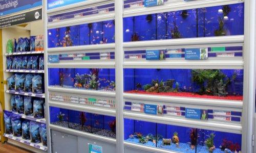 Pour l'autorisation du commerce Florennes Aquariums à la rue des Minières