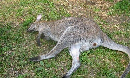 Sauvons nos animaux non domestiques en demandant la modification de l'arrété du 08 octobre 2018