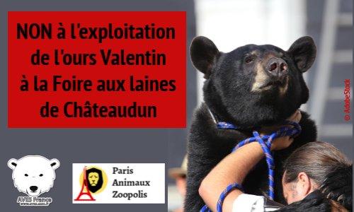 Pétition : Contre l'exploitation de l'ours Valentin à la Foire aux Laines de Châteaudun (28) les 6 et 7 juillet 2019.
