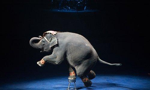 Pétition : NON aux cirques avec des animaux à BELLEY (Ain)