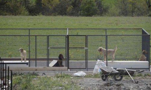 Pour l'arrêt des aboiements des chiens de Monsieur Thomas Bossetto