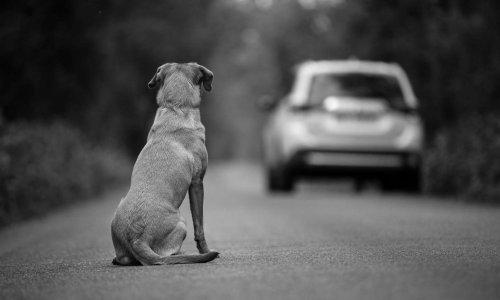 Pétition : L'O.N.G Animals Society propose un projet de loi pour lutter contre l'abandon des animaux de compagnie.