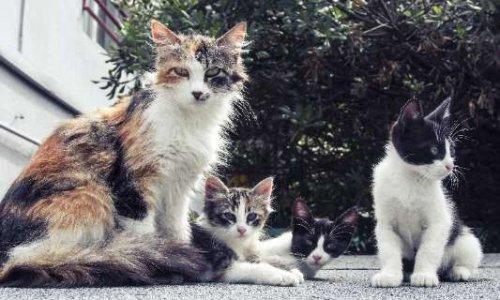 Rendre obligatoire la stérilisation des chats errants dans toutes les communes