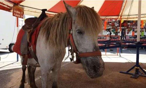 Manèges à poneys : stop aux tristes tourniquets !