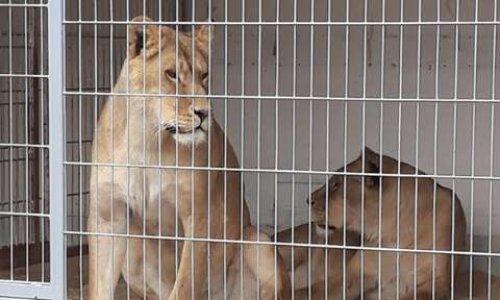 STOP aux cirques avec animaux à Carhaix