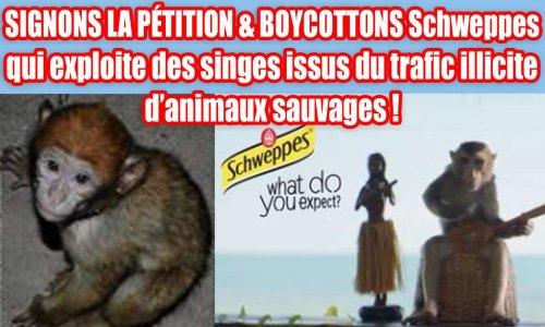 SIGNONS LA PÉTITION & BOYCOTTONS Schweppes qui exploite des singes issus du trafic illicite d'animaux sauvages !