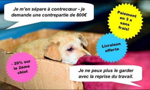 Petition Leboncoin Sponsorise Le Trafic Et Les Abandons De Chiens Dites Stop