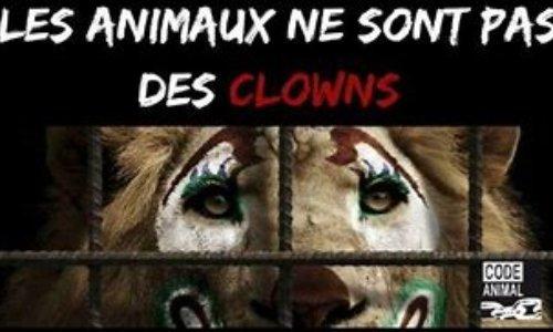 STOP AUX CIRQUES!