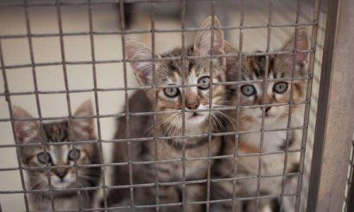 Pour une interdiction d importation d animaux de compagnie