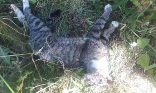 STOP à la torture et au massacre des chats sur Winenne