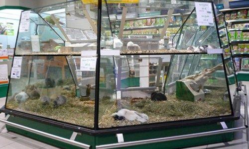 Pétition : Interdire la vente d'animaux chez Jardiland