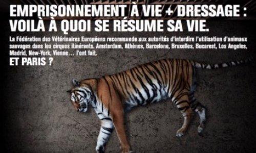 Non aux cirques avec animaux à Amiens