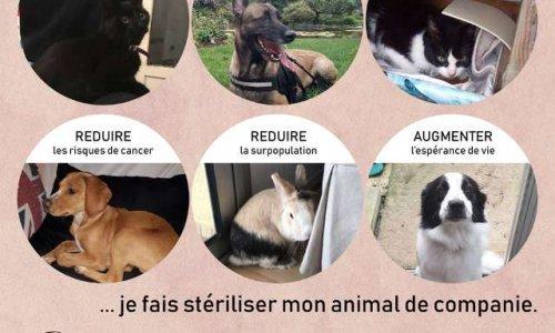 POUR LA STERILISATION OBLIGATOIRE DES ANIMAUX DE COMPAGNIE