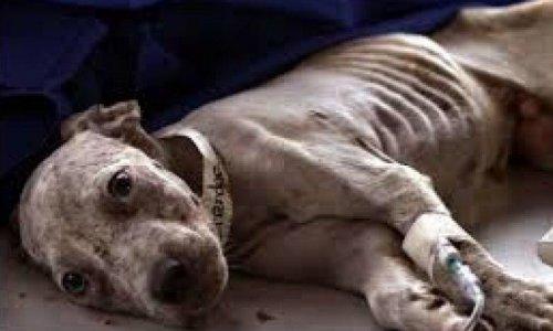 Peine de prison ferme pour la maltraitance animale