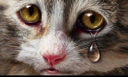 Stérilisation des chats errants de Millau