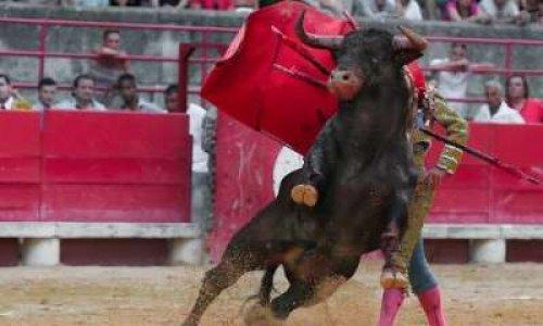 """Projet de loi contre la """"Non dénonciation d'actes de cruauté envers les animaux"""""""