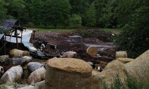 Pétition : Pour des conditions de vie saines pour les vaches de Manhay