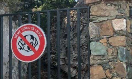 """Enlever l'interdiction des chiens dans le parc public """" Arboretum """" de Ville"""
