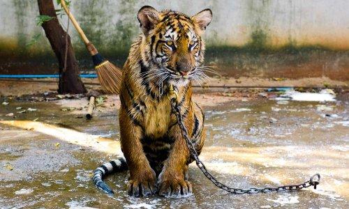 Luttons contre la maltraitance animale !