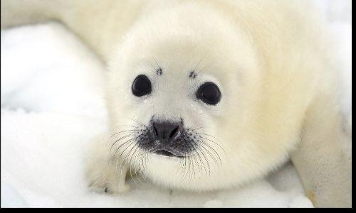 Sauvez les phoques en Antarctique