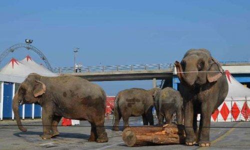 Plus de cirque avec animaux à MULHOUSE (ALSACE)