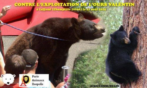 Non à l'exploitation de l'ours Valentin à Leffond (70) le dimanche 11 août 2019