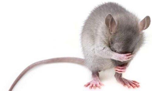 Monsieur Domb êtes-vous pour ou contre la technique du shoot pour achever les rats mourants à Pairi Daiza ?
