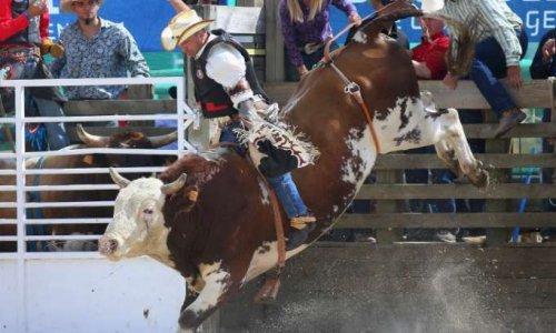 Pétition : Non à l'organisation d'un rodéo sur taureaux à Pontarlier