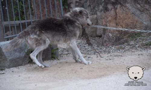 Ours et loups : NON à l'exploitation d'animaux sauvages lors de la fête médiévale de Watten (59) le 15 août 2019