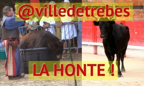Festad'oc de Trèbes : la fête de la honte et du mal-être animal (taureaux, ours, rapaces...)