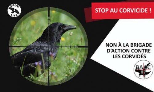 Pétition : STOPPONS le CORVICIDE ! - NON à La BACC 87 (Brigade d'Action Contre les Corvidés)