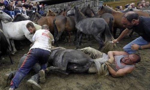 """Arrêtons de maltraiter les chevaux : stop au festival """"Rapa Das Bestas"""" !"""