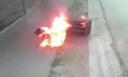 Sanction pour ceux qui ont brûlé un chien à Cuba