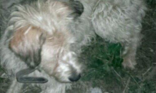 Salvati animalele de la tortura