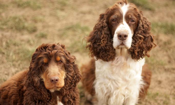 300 chiens et chats euthanasiés chaque jour en France. C'est INTOLÉRABLE !