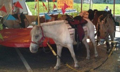 Non à l'utilisation des animaux dans les fêtes foraines !