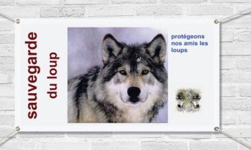 Pour une cohabitation pacifique entre les loups et les hommes