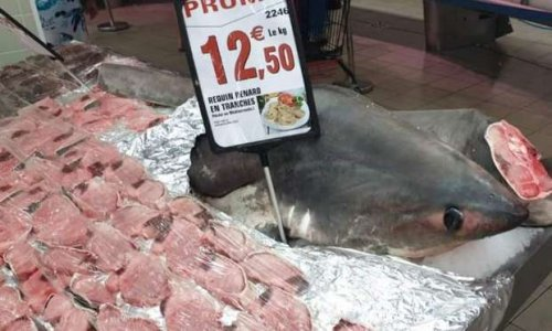 Contre la vente d'animaux menacés