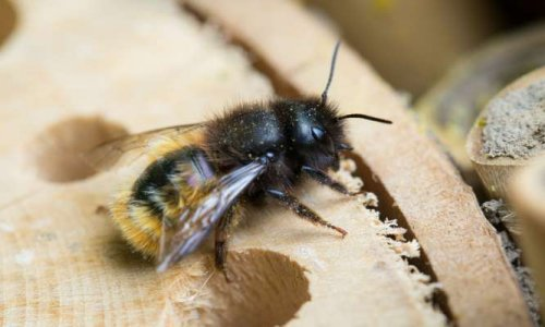 Pétition : STOP au génocide urbain… des abeilles sauvages !