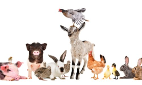 Pétition : Pour la mise en place d'une police pour les animaux