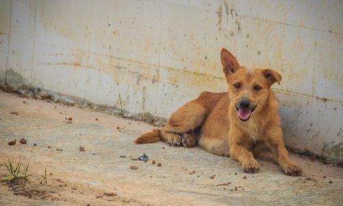 Stop aux massacres de chiens en Roumanie