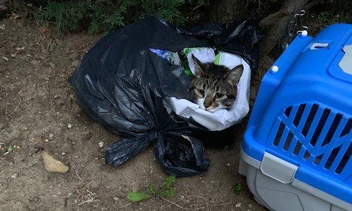 Mulhouse : un chat abandonné et jeté dans un sac poubelle !