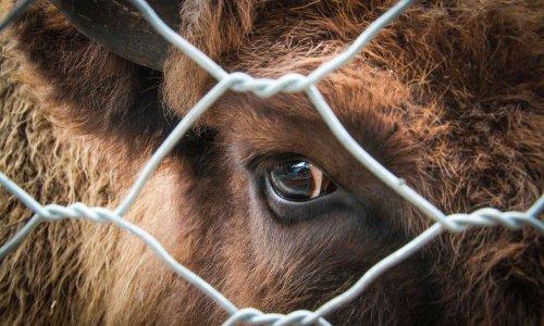 Monsieur le Ministre, nous demandons l'arrêt de la cruauté envers les animaux !
