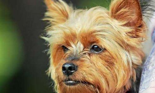 Peine exemplaire contre l'individu ayant jeté son chien du 6ième étage à Landerneau