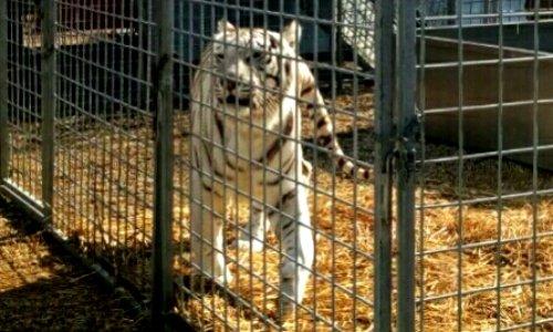 Stop aux cirques avec animaux à Toul