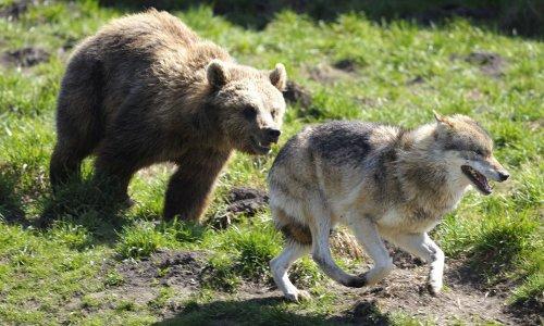 Pétition : Loups, ours, aigles, vautours, hiboux dressés : non à l'exploitation des animaux lors de la 9e Grande Fête Médiévale au Château de la Chapelle d'Angillon