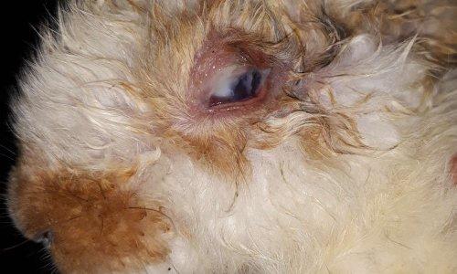 Sortir au plus vite les animaux enfermés et maltraités bidonvilles Audun-Le-Tiche