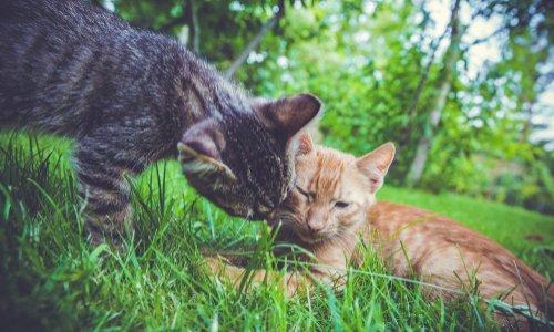 Disparition de deux chats nourris depuis 2011 à 2018